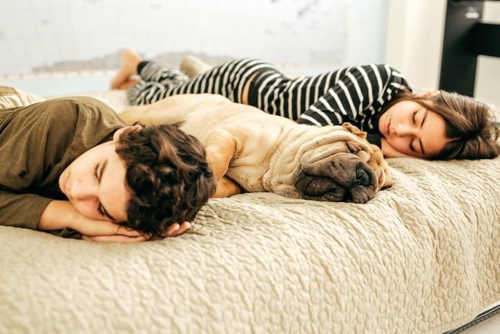 Do Our Pets Dream?